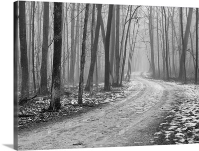 Foggy morning, late winter in Wright Woods Forest Preserve.