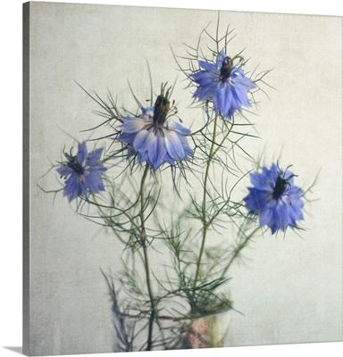 Four blue Nigella Sativa flowers on textured background.