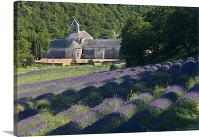 France, Gordes, Senaque Abbey, lavender field