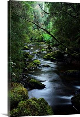 Franklin-Gordon Wild Rivers National Park, Tasmania, Australia