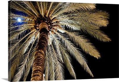Full moon glimmers through palm tree.