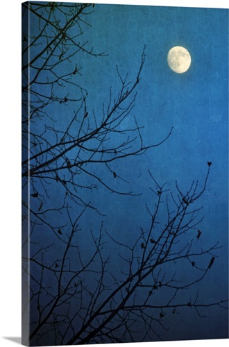 Full moon in deep blue sky framed by bare branches in silhouette of ...