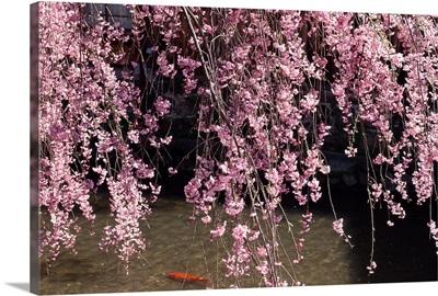 Gion, Kyoto Prefecture, Japan