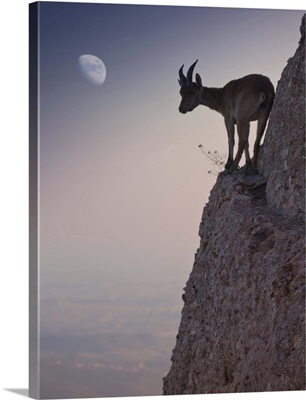 Goat runs a dangerous road up the mountainside
