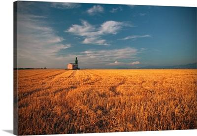 Golden field sky on background, France