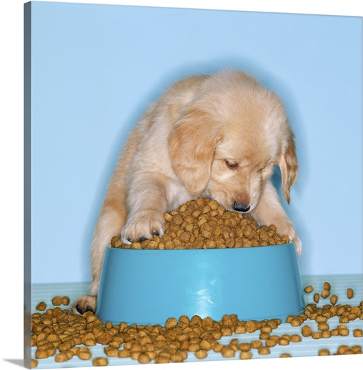 All About Dog Food Guide