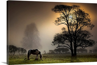 Grazing horse in partially wooded field.