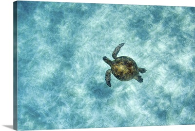 Green sea turtle in under water in Oahu, Hawaii.