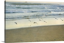 Gulls flying beside sea.