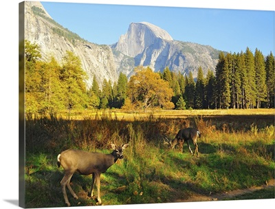 Half Dome with Yosemite valley at National Park.