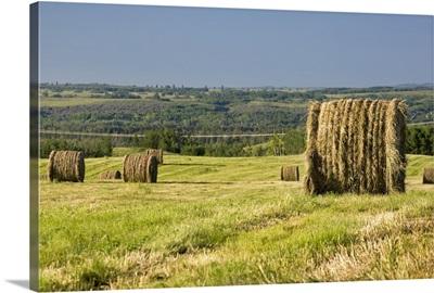 Hay Bales In A Cut Field
