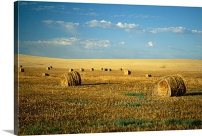 Hay field, North Dakota