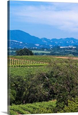 Hills near vineyard in Sonoma Valley, California