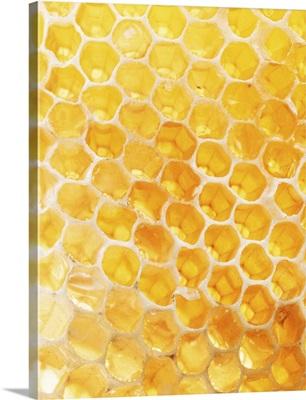 Honeycomb Closeup
