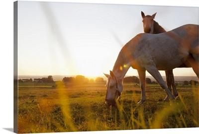 Horse grazing in rural field