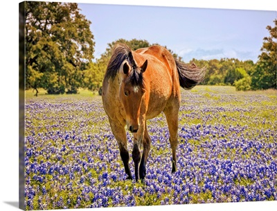 Horse In A Field Of Texas Bluebonnets