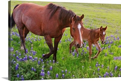 Horse on bluebonnet trail near Ennis, TX.