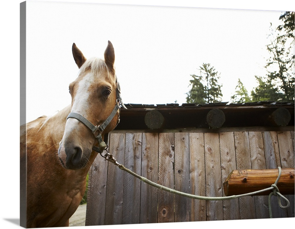 Horse tied to hitching post