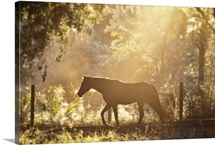 Horse underneath canopy of trees in forest running along fence, backlit by sunset.