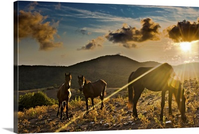 Horses grazing during sunset in Tolfa.
