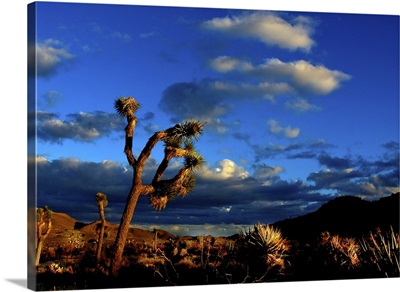 Joshua Tree End of Day