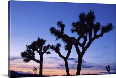 Joshua Tree National Park at sunset, California