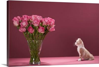 Kitten admiring vase of roses