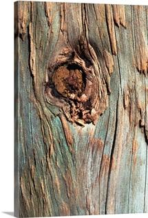 Knot in tree bark