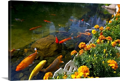 Koi fish swimming by flower garden