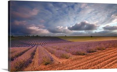 Lavender field at sunset, Valensole, France