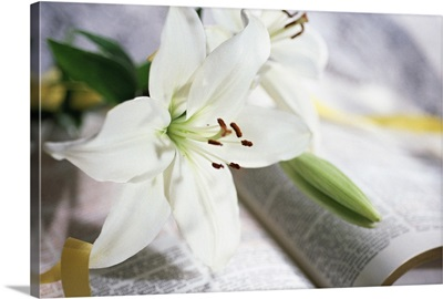 Lilies on open Bible