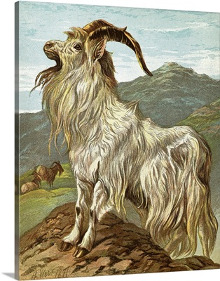 Lithograph Of Mountain Goat