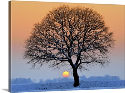 Lone tree against light in icy winter sunset, fields covered with snow.