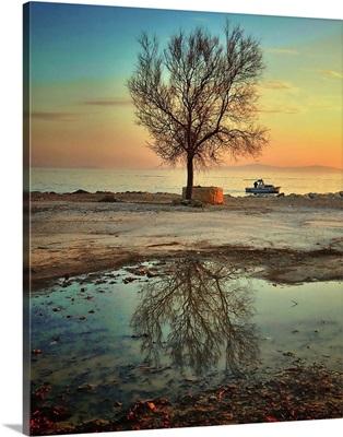 Lonely tree, Croatia