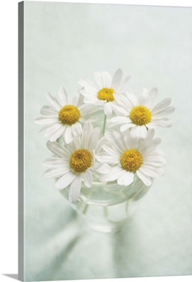 Looking down at vase of fresh white daisies.