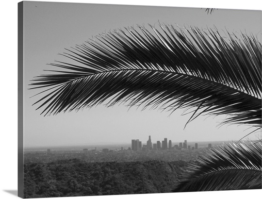 Los Angeles Skyline Framed By Palm Tree From Hollywood Hills