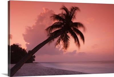Maldives, Filitheyo island, palm on the beach at sunset.