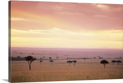 Masai Mara National Park in Kenya , Africa
