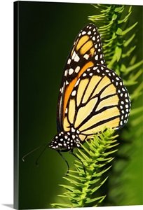 Monarch butterfly at marie selby botanical gardens wall - Marie selby botanical gardens coupon ...
