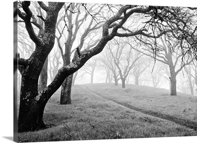 Morning fog and rain in forest on Mt. Diablo.
