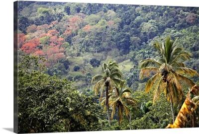 Mountain view, Dominican Republic