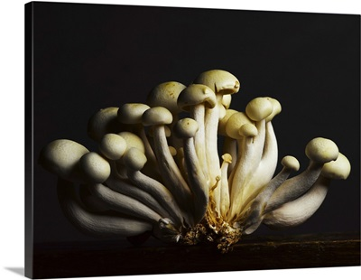 Mushrooms Clustered Together