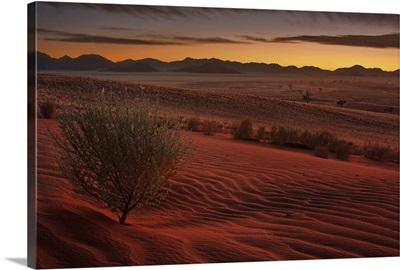 Namib Glow