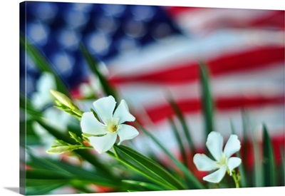 Oleander flowers with American flag in background.