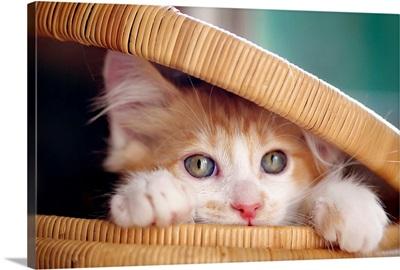 Orange and white kitten in basket.