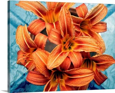 Orange day-lilies on blue glass.