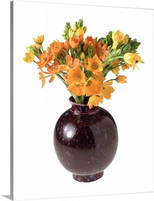 Orange star flower arrangement