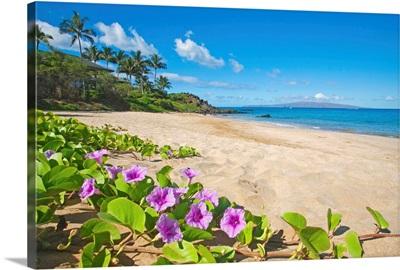 Palau'Ea Beach, Maui, Hawaii