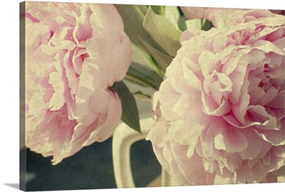 Pale pink peonies in white ironstone vase.