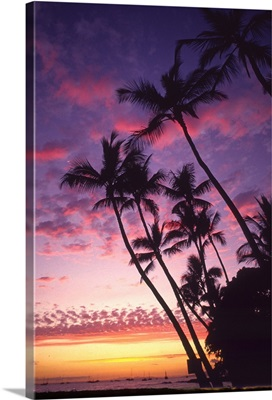 Palm trees along coastline silhouetted by a colorful sunset sky.